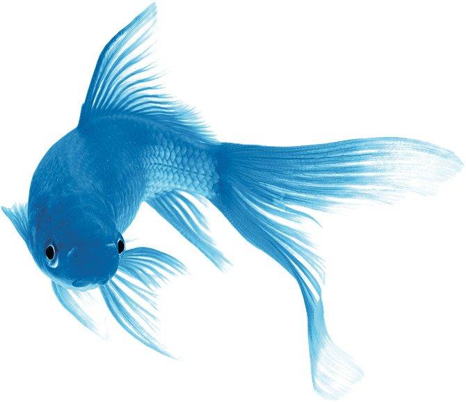 Blue Fish - Personal Branding
